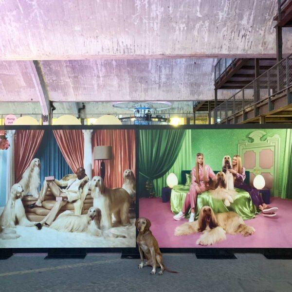 Klarna Expo 2019 Snoop Dogg Backdrops by Framme