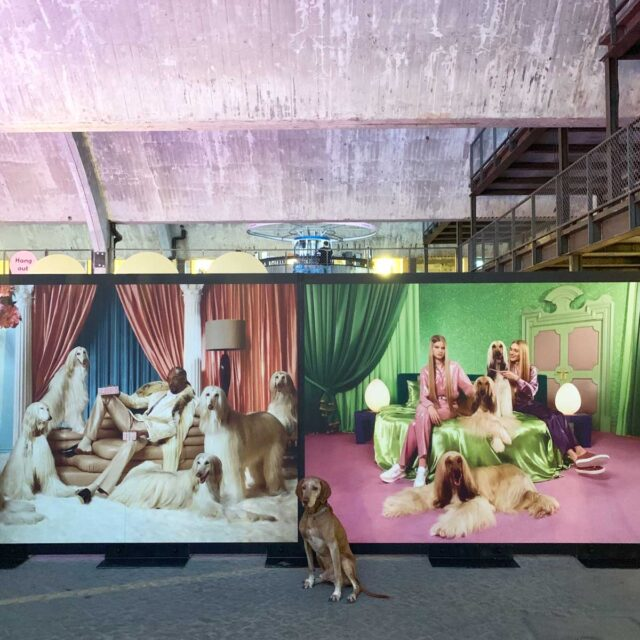 Klarna Expo 2019 Snoop Dogg Backdrops by Framme