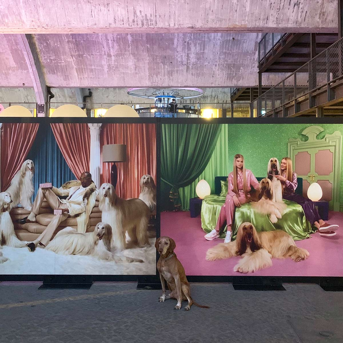 Dog in front of a Snoop Dogg Klarna wall