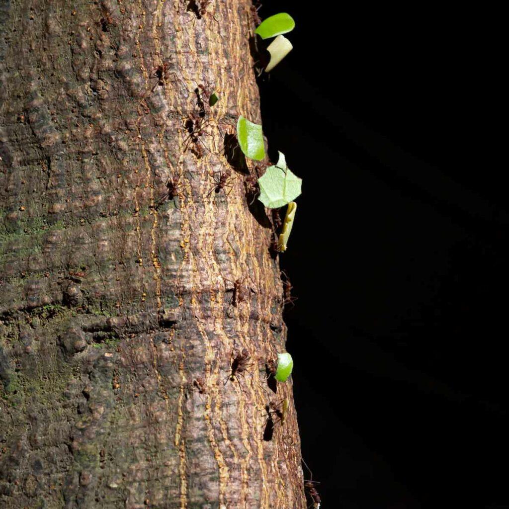 ants on tree